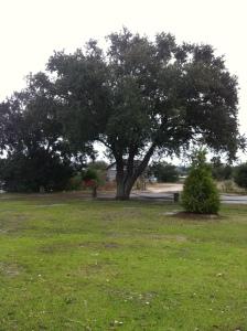 Rivercourt Tree